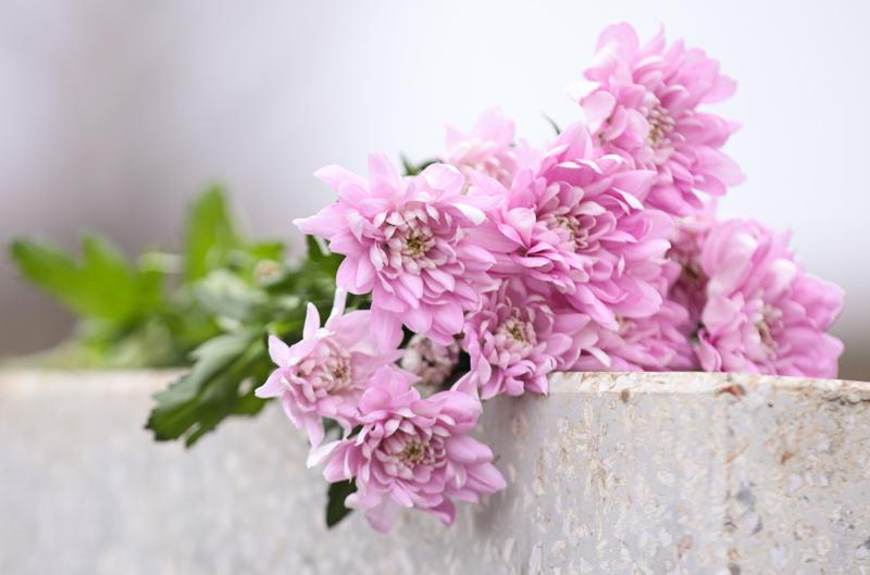 roze bosbloemen uit de natuur